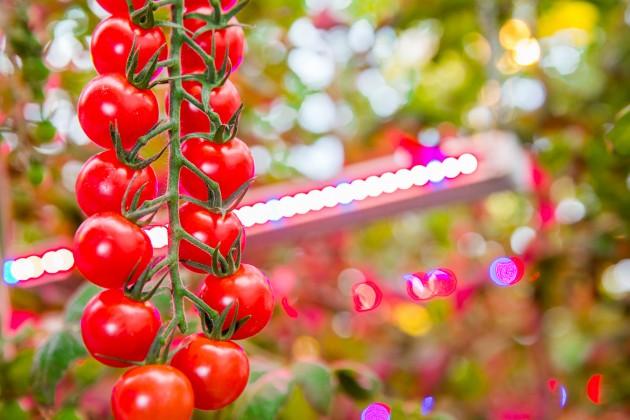 【新闻图片】Signify与Agro-Inwest签署协议,将全球最大的LED园艺照明项目扩容,达68.5公顷