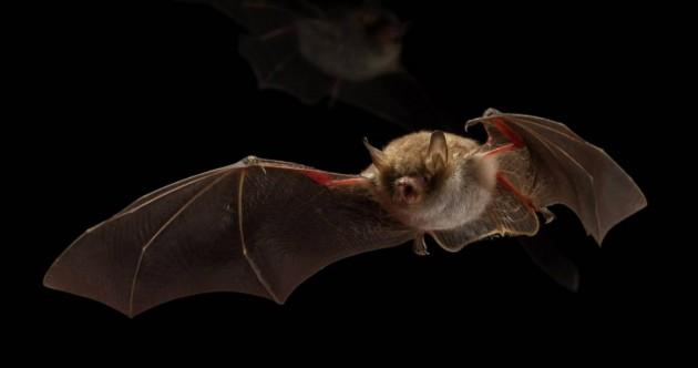 【新闻图片】昕诺飞为荷兰小镇安装全球首套蝙蝠友好型路灯_3