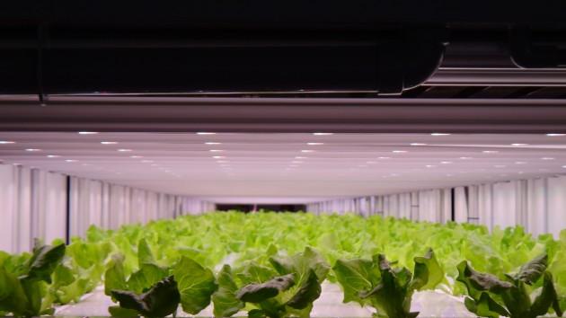 【新闻图片】飞利浦GreenPower LED助力日本Prime Delica生产更健康、安全的作物,满足7-Eleven顾客所需01