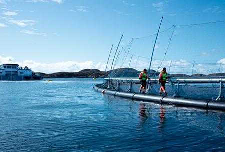 【新闻图片】昕诺飞与ScaleAQ合作,携手打造可持续水产养殖解决方案
