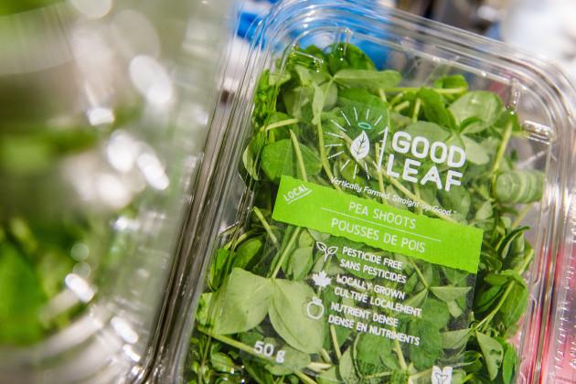 【新闻图片】昕诺飞LED植物照明系统助力加拿大GoodLeaf农场提高全年产量02